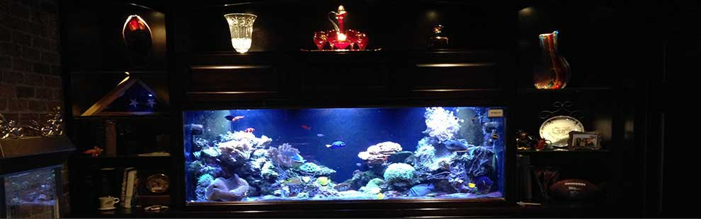 We design and install custom tank setups for your home or business